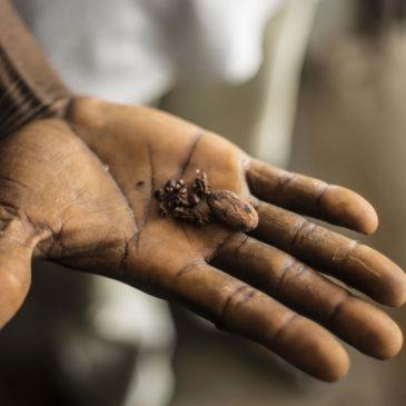 Les producteurs de cacao bio de M'Brimbo – Côte d'Ivoire