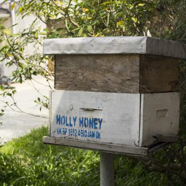 Holly Honey, une coopérative de miel bio et équitable – Côte d'Ivoire