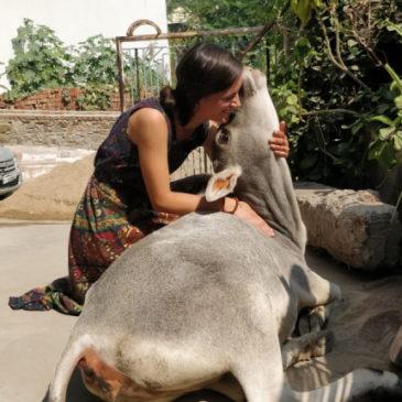 Voyager dans le Nord-Ouest de l'Inde #02 – Être une femme seule
